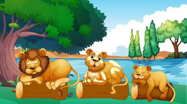 Scena con famiglia di leoni nel parco