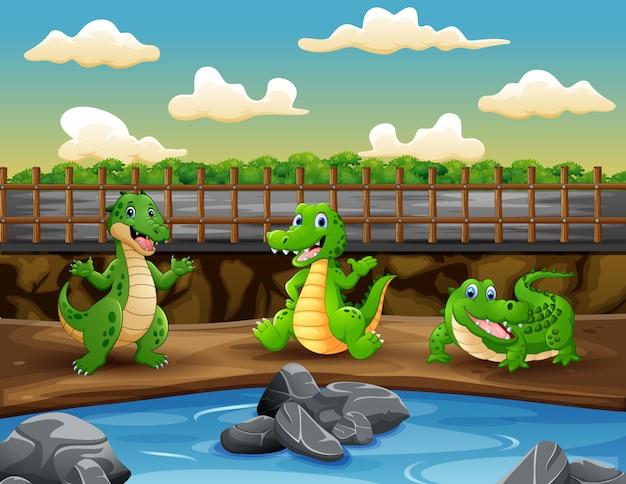 Scena con tre coccodrilli nell'illustrazione dello zoo