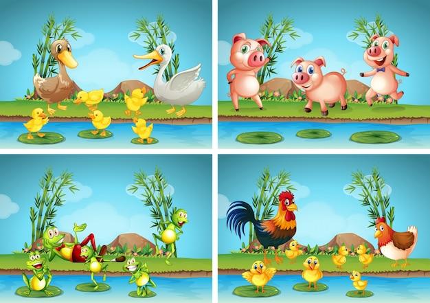 Scene con animali da allevamento