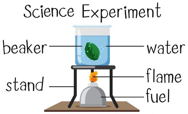 Esperimento scientifico con foglia di ebollizione
