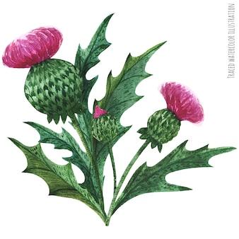 Boutonniere piante scozzesi selvatiche, bouquet di cardo selvatico