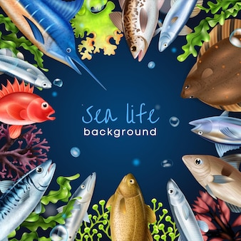 Cornice realistica di pesce di mare con diversi tipi di pesce simboli illustrazione