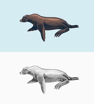 Leone marino creature marine animale nautico pelliccia sigillo o pinnipedi segni vintage retrò stile doodle