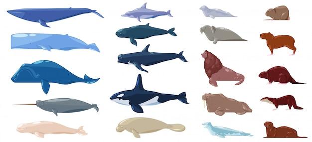 Mammifero marino acqua carattere animale delfino tricheco e balena nella vita marina o oceano illustrazione set marino di leoni marini o leoni marini e sigillo o lontra illustrazione impostato su sfondo bianco