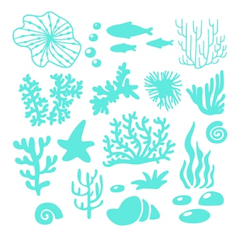 Flora e fauna marina o oceanica