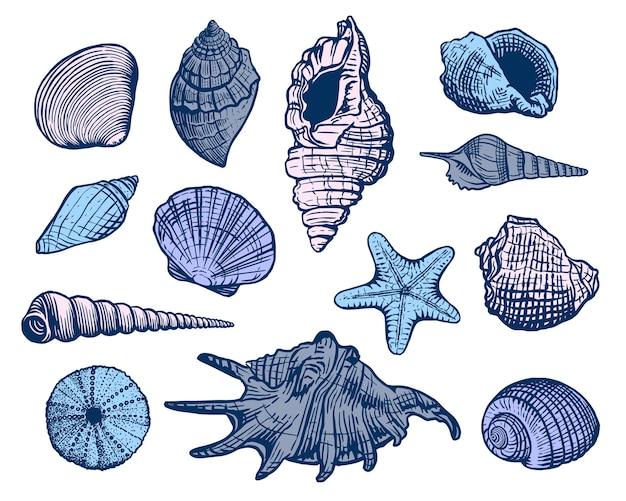 Insieme variopinto di conchiglie di mare. shell bella illustrazione disegnata a mano. mollusco acquatico realistico dell'oceano della natura