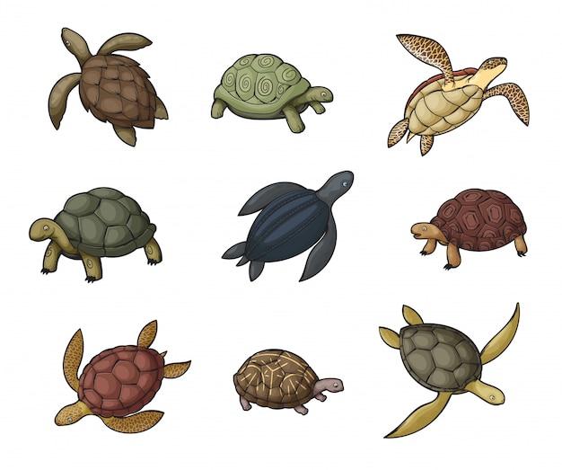 Icone animali tartaruga marina, tartaruga e tartaruga d'acqua dolce