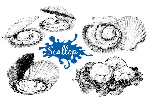 Frutti di mare, set, calamari, ostriche, cancro, polpo piccolo, sgombro, capesante, illustrazione, vintage, modelli, design, mare, negozi, ristoranti, mercati. mano, disegnato, inchiostro, schizzo Vettore Premium