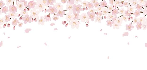 Floreale senza soluzione di continuità con fiori di ciliegio in piena fioritura isolato su un bianco.