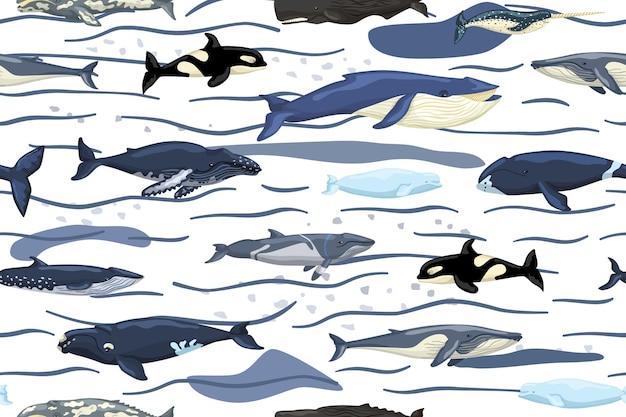 Balene senza cuciture su fondo bianco con onde e macchie. modello di personaggi dei cartoni animati dell'oceano in stile scandinavo per bambini.