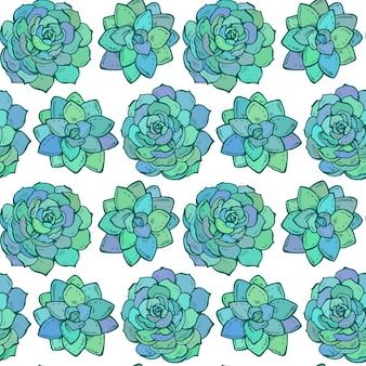 Modello senza cuciture con piante succulente di colore disegnato a mano su sfondo bianco