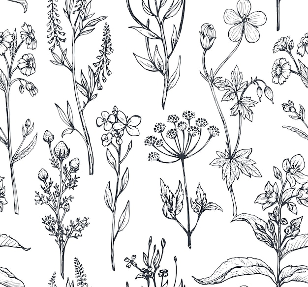 Senza cuciture con erbe e fiori disegnati a mano su fondo bianco