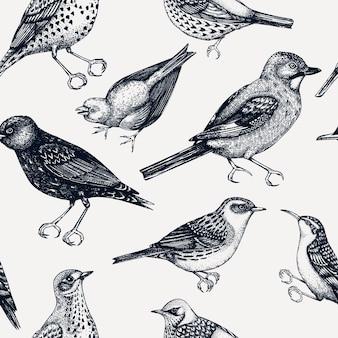 Modello senza cuciture con illustrazioni di uccelli dettagliate abbozzate a mano in stile inciso