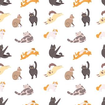 Modello senza cuciture con gatti di razza che dormono, camminano, lavano, si allungano su bianco.