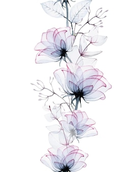 Bordo acquerello senza cuciture di fiori di rosa trasparenti e foglie di eucalipto isolate su bianco
