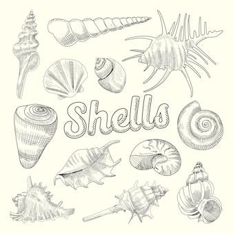 Set acquatico disegnato a mano di conchiglie