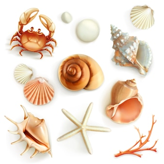 Seashells impostato su bianco