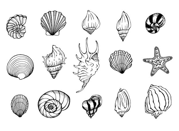 Insieme di vettore di conchiglie e stelle marine. sfondo marino. illustrazioni disegnate a mano.