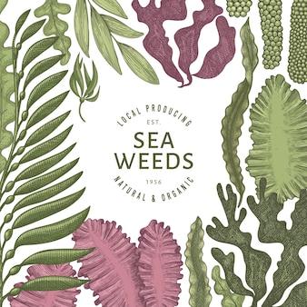 Modello di colore di alghe. illustrazione di alghe disegnate a mano. banner di frutti di mare stile inciso. sfondo di piante di mare retrò