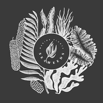 Design alghe. illustrazione disegnata a mano delle alghe di vettore sul bordo di gesso. frutti di mare in stile inciso