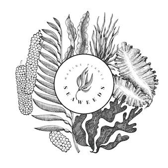 Modello struttura alghe. illustrazione disegnata a mano di alghe di vettore.