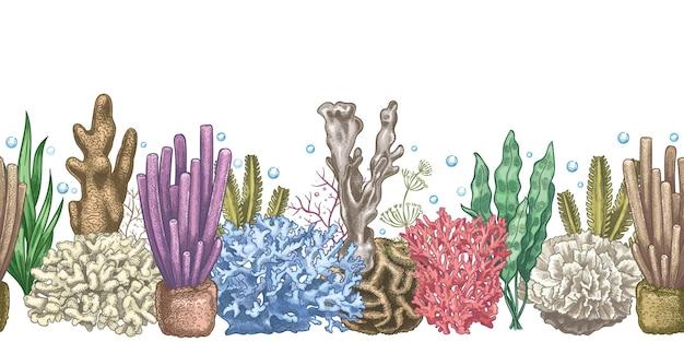 Bordo senza giunte di alghe. alghe e coralli della barriera corallina, oceano sottomarino e vita dell'acquario. blocco per grafici di vettore di schizzo di stile marino giapponese, cinese. illustrazione della barriera corallina nautica, alghe aquatic