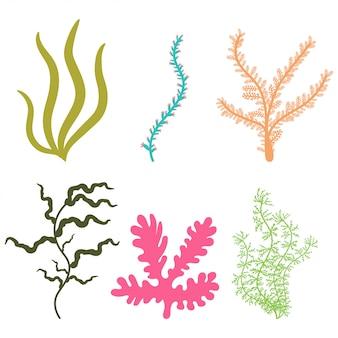 Set semplice di alghe.