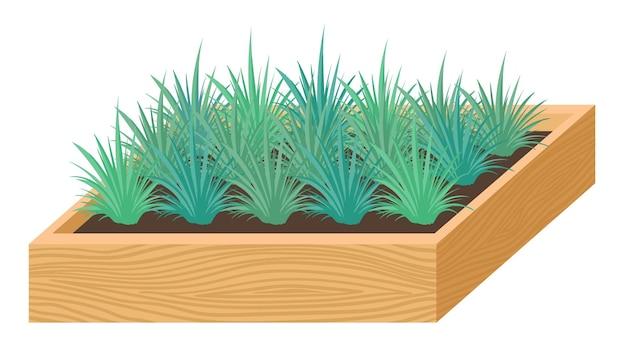 Piantine per piante da casa e da giardino in una scatola