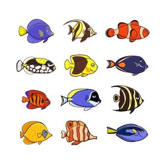 Selezione di pesci colorati