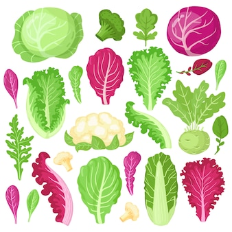 Selezione di verdure colorate