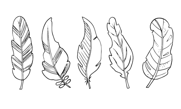 Set di piume di uccelli astratte disegnate a mano