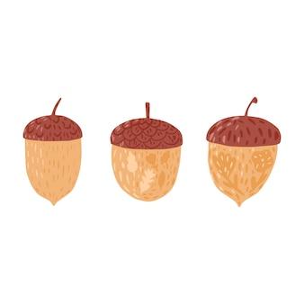 Impostare le ghiande su sfondo bianco. colore marrone ghiande stagione autunnale con fiori e foglie disegnati a mano in stile doodle