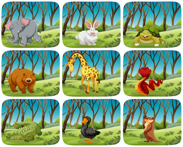 Set di animali nelle scene della natura