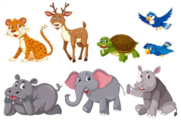 Una serie di animali su sfondo bianco