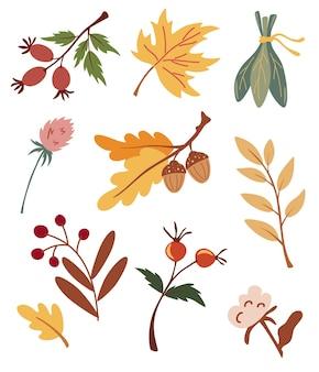 Set di foglie secche autunnali, bacche e fiori. raccolta di varie ghiande, acero, rosa canina, cotone e rami. erbario biologico. fogliame della foresta autunnale e illustrazioni vettoriali di elementi autunnali.