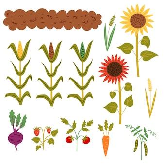 Impostare il raccolto autunnale dal letto. collezione garden: aiuola, mais, girasoli, grano, piselli, carote, pomodori, fragole, barbabietole. clipart di tiraggio della mano di vettore