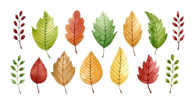Set di foglie autunnali e ramoscelli isolati su bianco