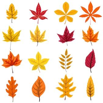 Insieme delle foglie di autunno su fondo bianco. elemento