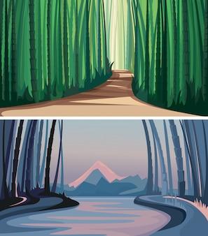 Insieme di foreste di bambù. paesaggi naturali meravigliosi.