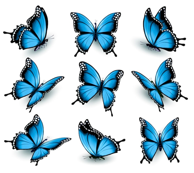 Set di bellissime farfalle blu. vettore.