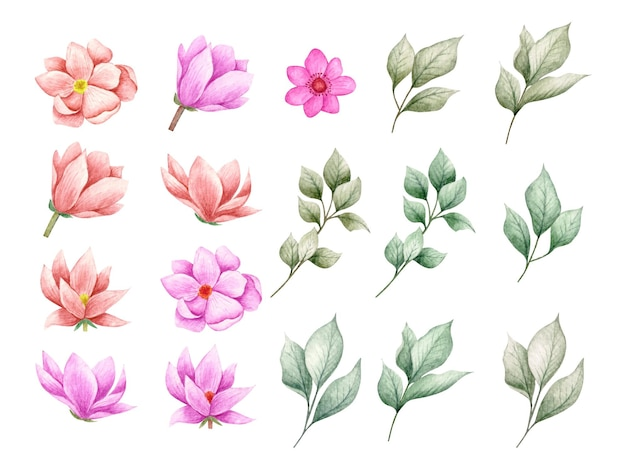 Set di bellissimi fiori e foglie rami per biglietto di auguri