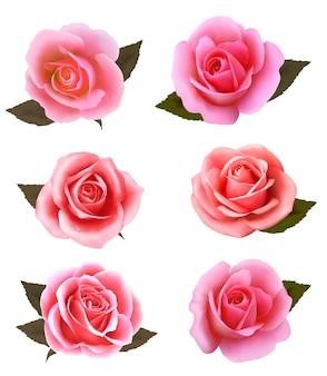 Set di bellissime rose rosa.