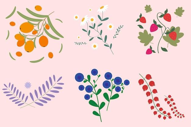 Set di bacche ed erbe per il tè fragole camomilla olivello spinoso mirtilli e lavanda