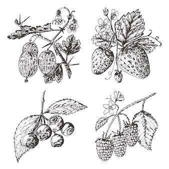 Metti le bacche. lampone, mirtillo, fragola, uva spina. incisi disegnati a mano nel vecchio schizzo, stile vintage. elementi decorativi per le vacanze. botanica di frutta vegetariana.