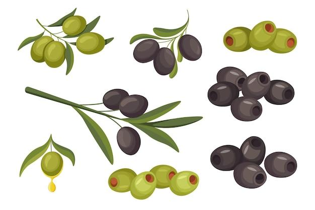 Set bacche di oliva nere o verdi verdura naturale, cibo sano. pianta matura organica isolata sul gambo con foglie, produzione di eco farm, ingrediente per olio, insalate e pasti del fumetto