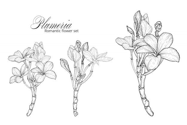 Un insieme di fiori bianchi e neri di plumeria.