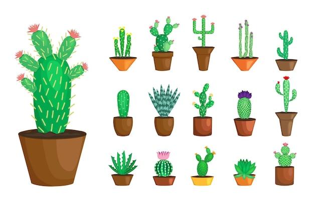 Set di fioritura cactus isolato su bianco