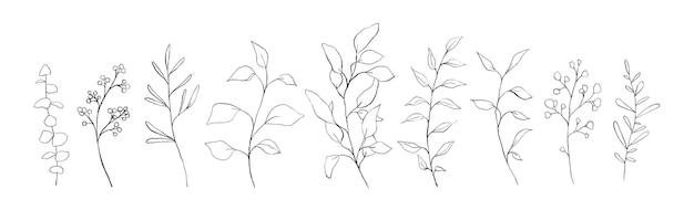 Set di foglie floreali di arte di linea botanica, piante. rami di schizzo disegnato a mano isolati su priorità bassa bianca. illustrazione vettoriale