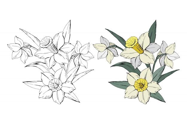Set di bouquet di narcisi bianchi colorati e monocromatici