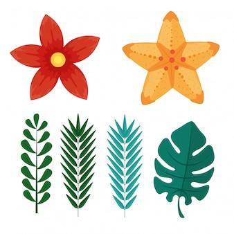 Set, rami con foglie e fiori tropicali